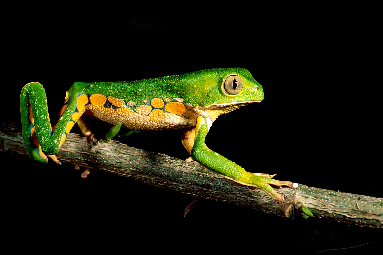 Soluções para biodiversidade e impactos climáticos desenvolvidas na RNP são destaque na GÉANT, a principal rede acadêmica da Europa